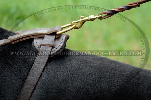 Wide chest plate Doberman harness with brass hardware