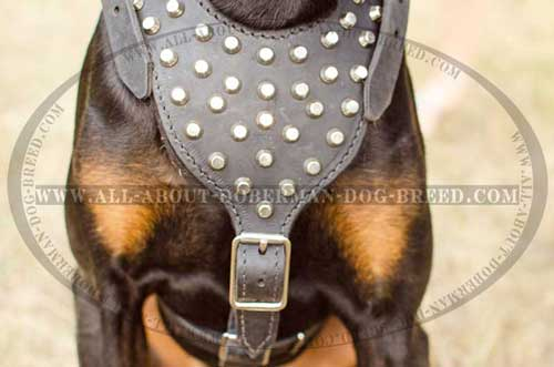 Leather Doberman harness with pyramids