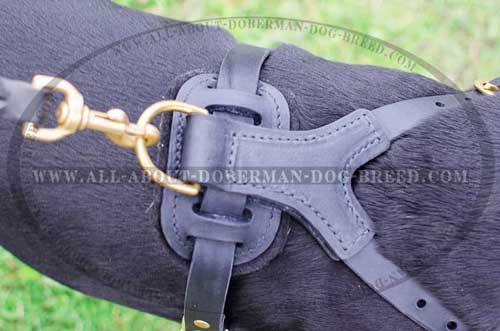 Leather Doberman harness with padded back plate