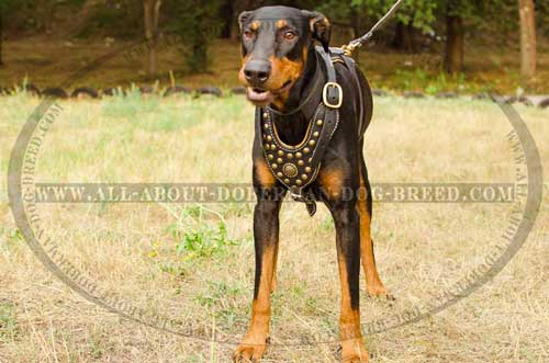 Luxury brass medallion and studs for leather harness