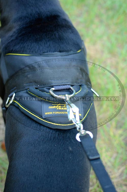 Exclusive Doberman harness with a handle