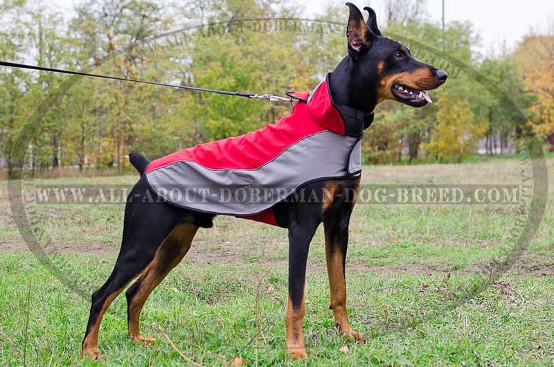 Wonderful winter weather-proof Doberman coat