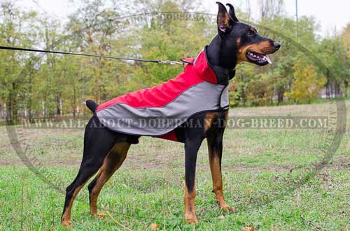 Walk your Doberman in winter with this coat!