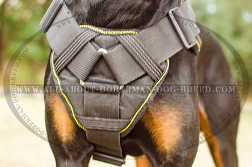Comfortable nylon Doberman harness