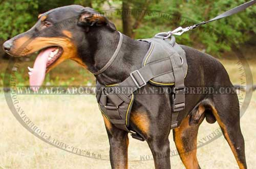 Tracking nylon Doberman harness