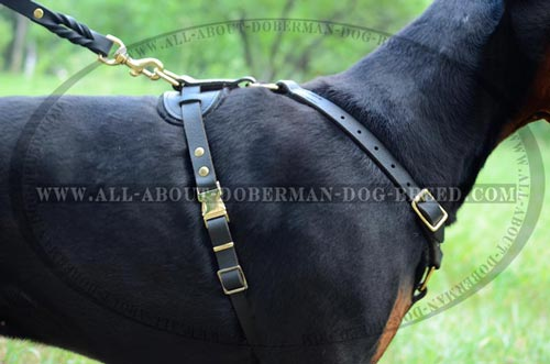 Exclusive design Doberman harness