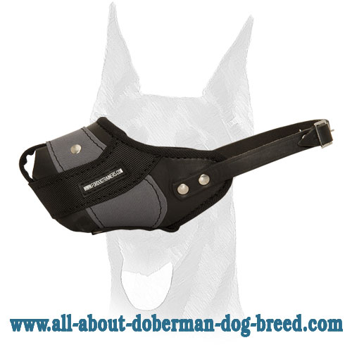 Agitation training Doberman muzzle