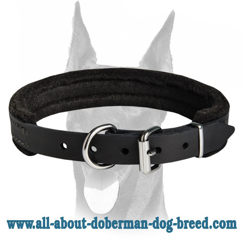 Best training leather felt padded collar only 1 inch (25 mm) wide