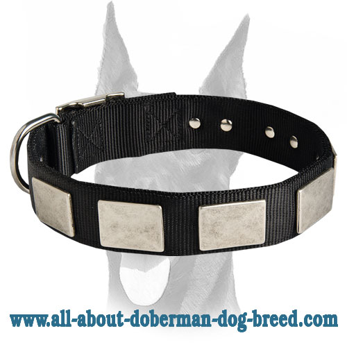 Gorgeous nylon collar with vintage massive plates for Doberman