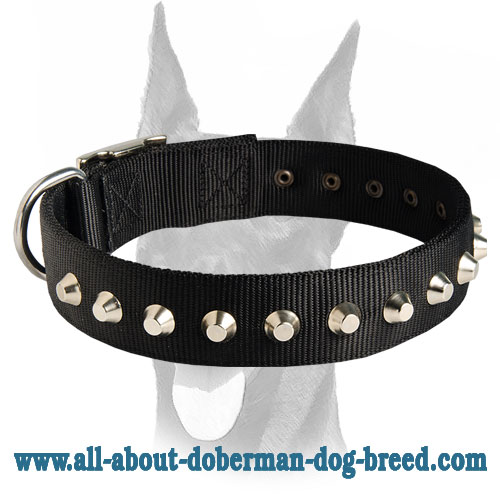 Outstanding nylon collar with silver-like studs for Doberman