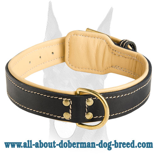 Gorgeous Nappa padded leather Doberman collar