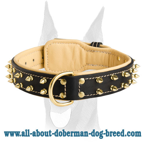Awesome royal Nappa padded leather collar with brass spikes