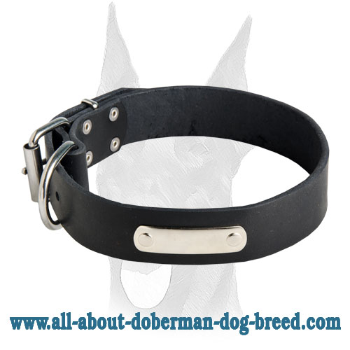 Wide leather collar with ID personalization tag for Doberman