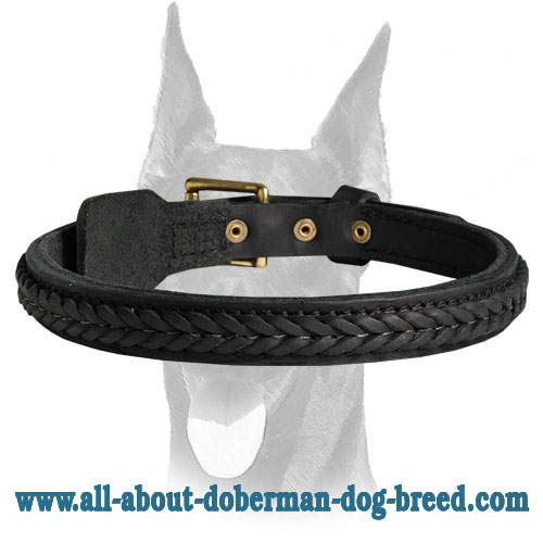 Gorgeous looking decorated leather Doberman collar
