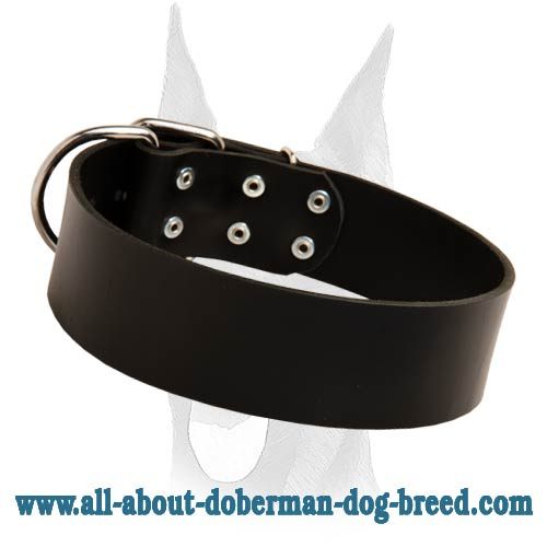 Best training and walking leather collar for Doberman
