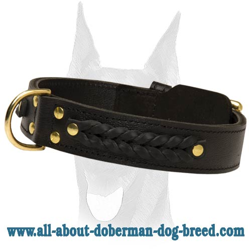 Amazing extra wide 2ply leather Doberman collar