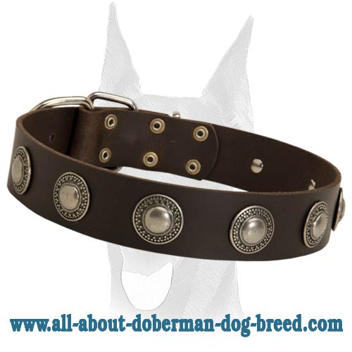 Luxury handcrafted leather collar with silver conchos for Doberman