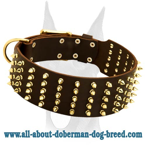 Leather decorated collar with 5 rows of brass spikes for Doberman