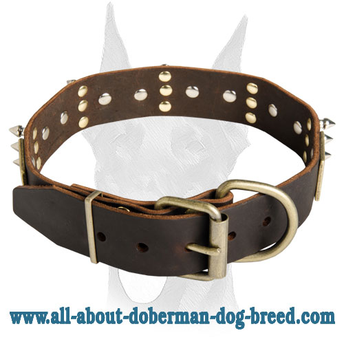 Stylish Doberman collar decorated with plates and spikes