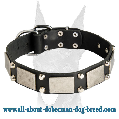 Vintage Doberman collar studded with nickel decoration