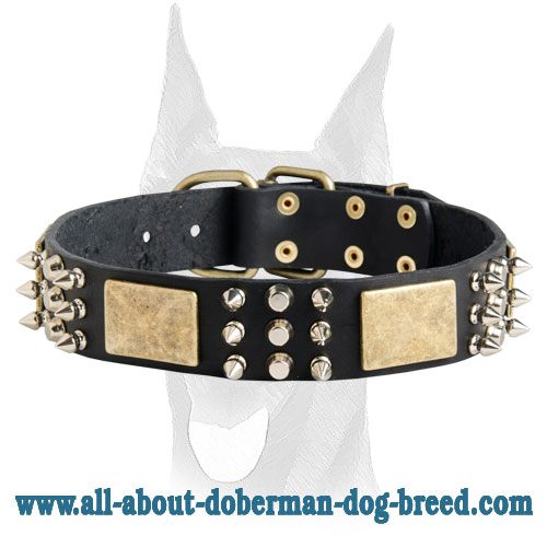 Doberman leather collar with massive brass plates, nickel pyramids and spikes