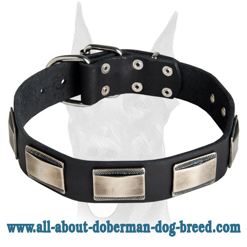 Gorgeous handcrafted leather collar with vintage nickel plates for Doberman