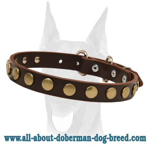 Amazing leather collar with attractive brass circles