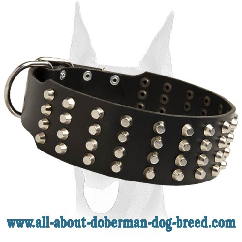Pyramid studded leather 2 inch wide Doberman collar