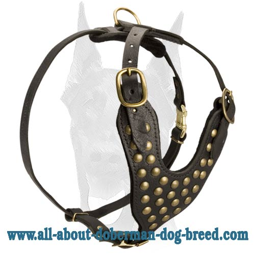 Exclusive style Doberman leather studded harness