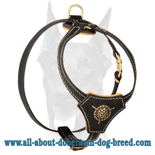 Incredibly attractive walking leather harness for Doberman