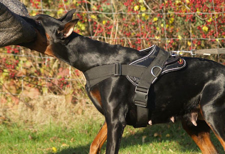 Doberman Training Dog Harness - Working dog Harness for Doberman