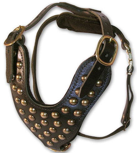 Doberman padded leather dog harness with studs- studded best dog harness for Doberman Pinschers