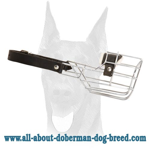 "Great ""no-bite"" wire basket muzzle for your Doberman"