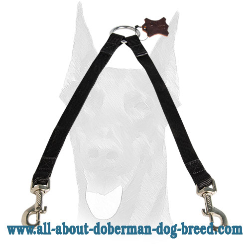 Strong coupler for walking two Dobermans