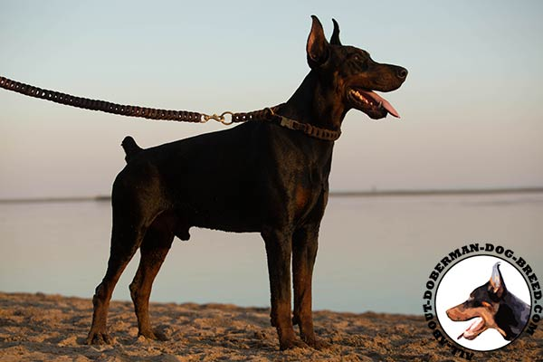 Doberman leather leash with rustless brass plated hardware for safe walking