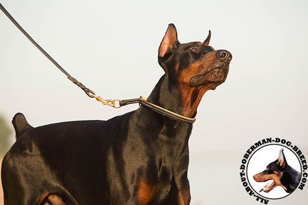 Doberman leather leash of lightweight material with handle for safe walking