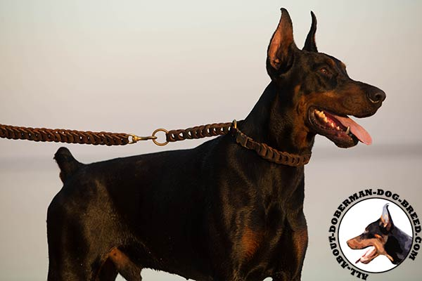 Doberman leather leash with rust-proof hardware for walking