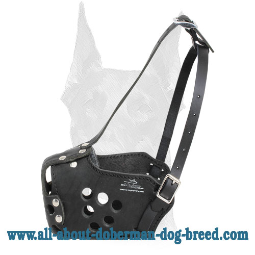 Perfect fit training muzzle for Doberman