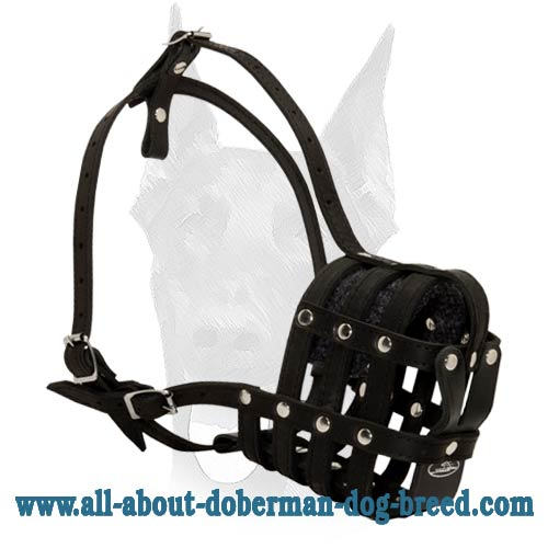 Comfortable lightweight Doberman muzzle