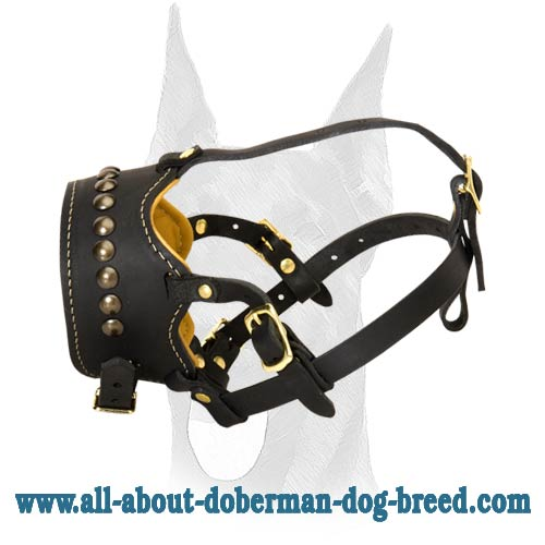 Safe and securely riveted leather Doberman muzzle
