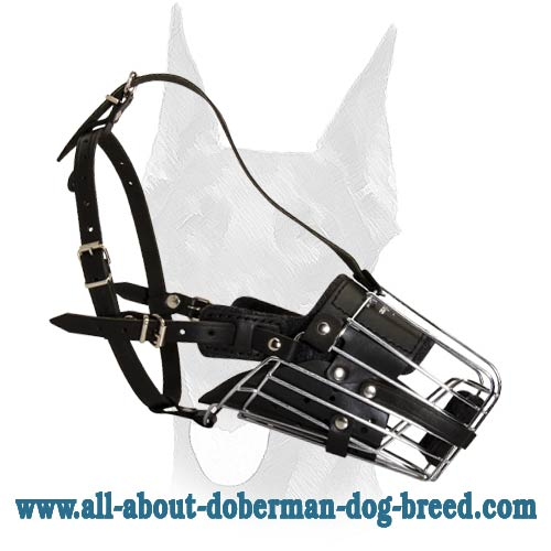 Completely safe riveted Doberman muzzle