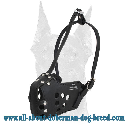 Anti-rubbing leather Doberman muzzle with special ventilation holes