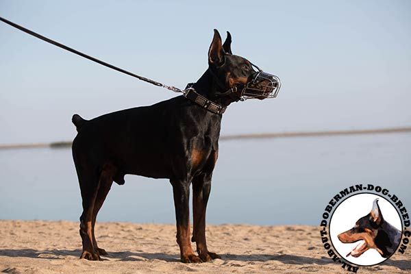 Doberman wire cage muzzle with strong fittings for walking