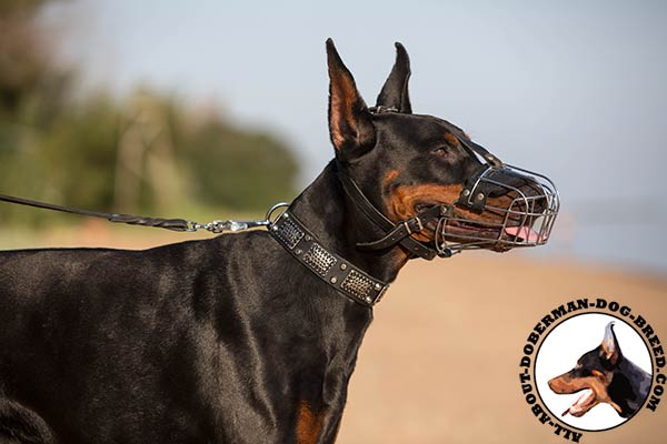 Doberman wire cage muzzle of high quality with traditional buckle for improved control