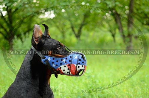Utmost comfort Doberman leather muzzle with front steel bar