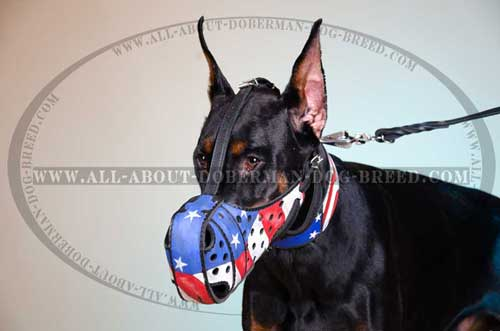 Handpainted American Pride leather Doberman muzzle