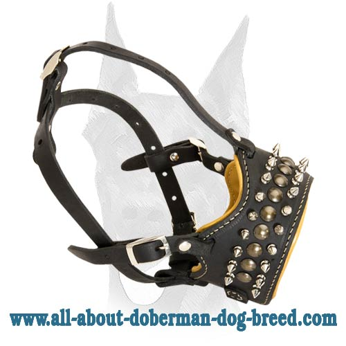Spiked Dog Collar Prevents Bites