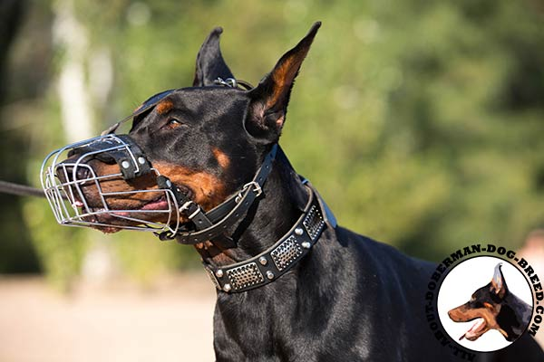 Wire basket muzzle for Doberman breed
