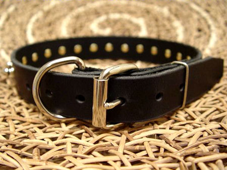 narrow leather dog collar with studs