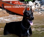 Family Security Dobermans